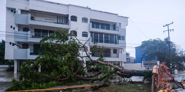 A tree lays on its side, toppled by Hurricane Delta in Cancun, Mexico, Wednesday, Oct. 7, 2020.