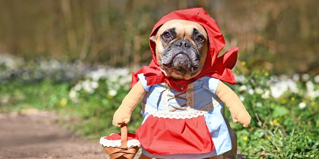 """""""Baby Red Riding Hood"""" wasn't necessarily trending this year, but this was too beautiful not to share."""