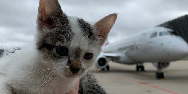 Bo the kitten. (Louisville Muhammad Ali International Airport)