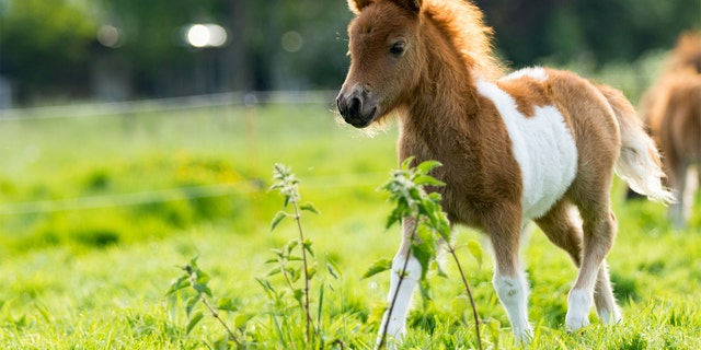 The couple said their young filly was valued at $4,500.