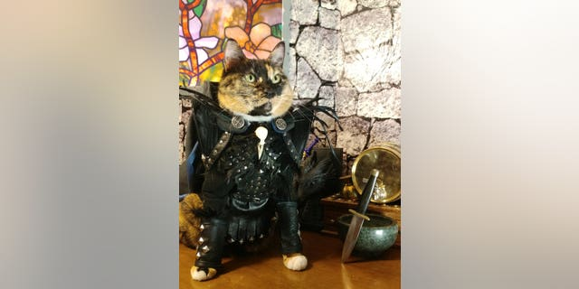 The pets' owner didn't disclose, 하나, if the cats play by the true rules of cosplay, and imitate the characters they're dressed as.