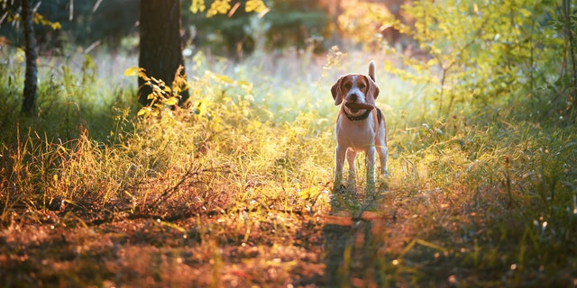Take a walk in fall foliage and ground your senses in the present moment. (iStock)