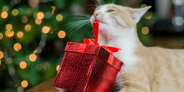 Is your cat feeling left out at Christmas? Fancy Feast has an idea. (iStock)