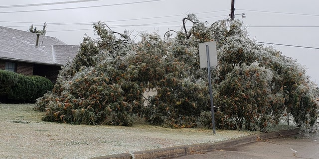 Major tree damage has been reported across Oklahoma due to an ice storm that's left over 300,000 without power.