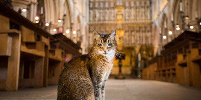 Doorkins Magnificat (pictured) came to the Southwark Cathedral in London in 2008 and quickly made the cathedral her home. (SWNS)