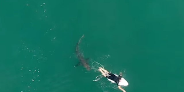 Professional surfer Matt Wilkinson had a close encounter with a shark while surfing near Ballina, New South Wales, on Wednesday.