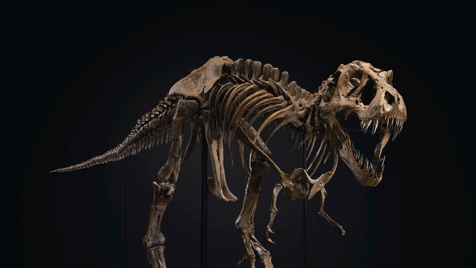 Enormous T. Rex skeleton sold at auction for $32M: 'One of the best specimens ever discovered'