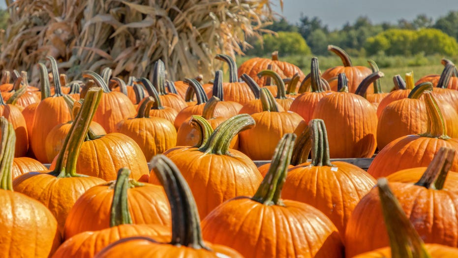 Canned pumpkin brand dismisses shortage rumors, provides reason for limited availability