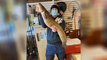 Illinois angler hooks state record with 'beautiful' burbot fish