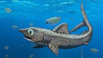 Bizarre 370M-year-old shark had teeth unlike any other creature on Earth
