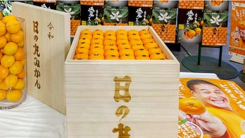 Japanese mandarin oranges purchased at $9.6G for a single crate