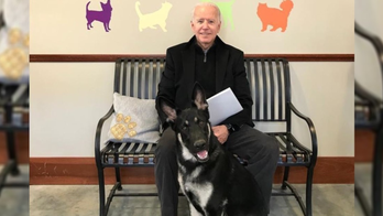 President-elect Joe Biden twisted ankle while playing with dog Major