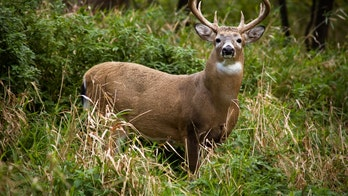 Pennsylvania hunters asked to donate deer to help feed those in need