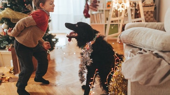 Christmas song written for dogs inspires barking, tail-wagging