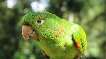 Pet parrot saves owner from house fire in Australia by calling his name