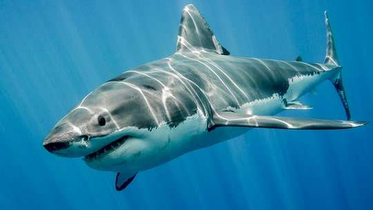 California snorkeler attacked by shark in Hawaii