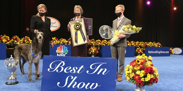 National Dog Show results: Scottish deerhound takes best in show, but tiny pup Chester wins Twitter's heart
