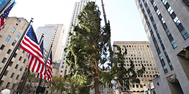 The Rockefeller Center Christmas Tree arrives at Rockefeller Plaza and is craned into place on No. 14 in New York City. (Cindy Ord/Getty Images)