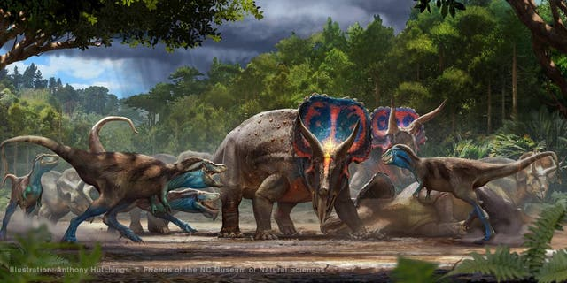 Artist's rendering of battling Tyrannosaurus rex and Triceratops horridus. Illustration: Anthony Hutchings. (Credito: Friends of the NC Museum of Natural Sciences)
