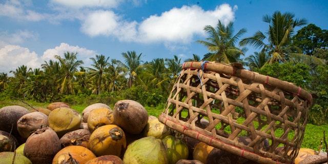 School made pure coconut oil.