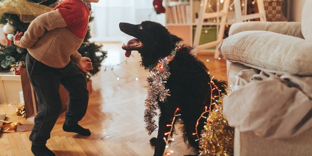 Pet food company Tails.com has released a Christmas song just for dogs. (iStock)