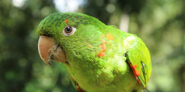 Eric The Parrot: Literally Saves His Owner's Life, What A Champion!