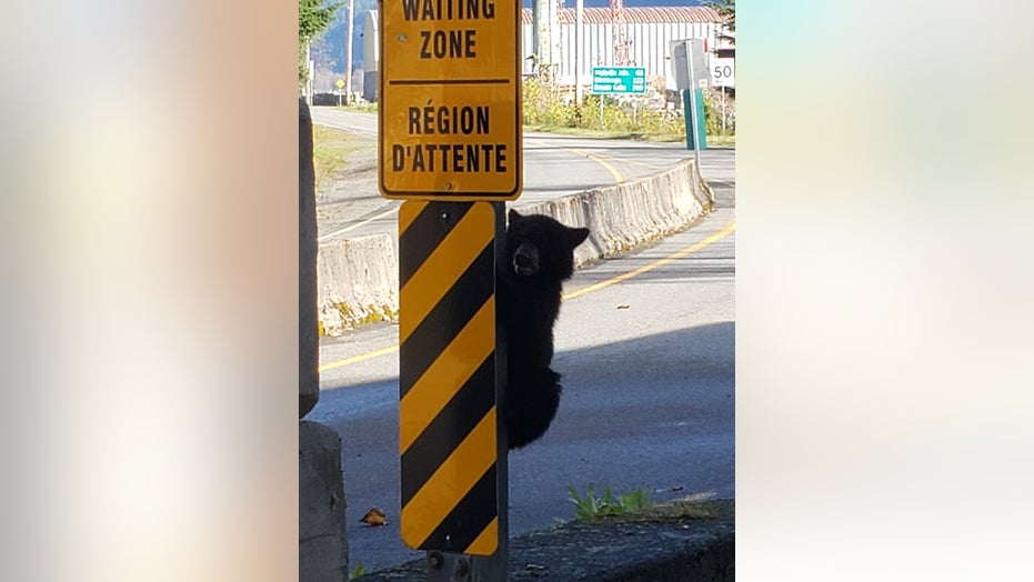 Bear cub denied entry to Canada after attempt at 'forceful entry,' funny post shows