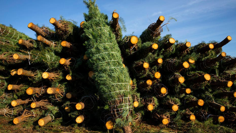 Americans increasingly turning to fresh Christmas trees during pandemic: 'It really is a memory maker'