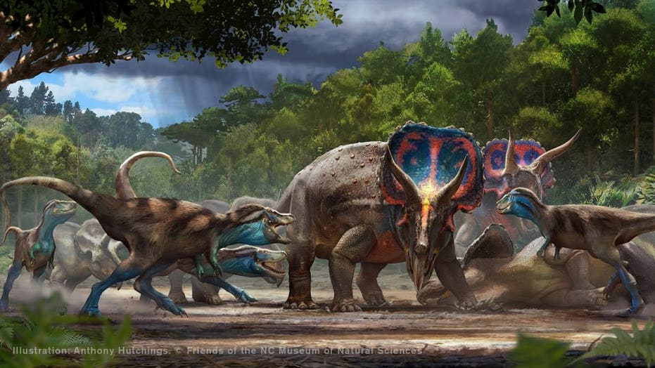 T. rex and triceratops fossils unearthed in ferocious battle, to be displayed for first time