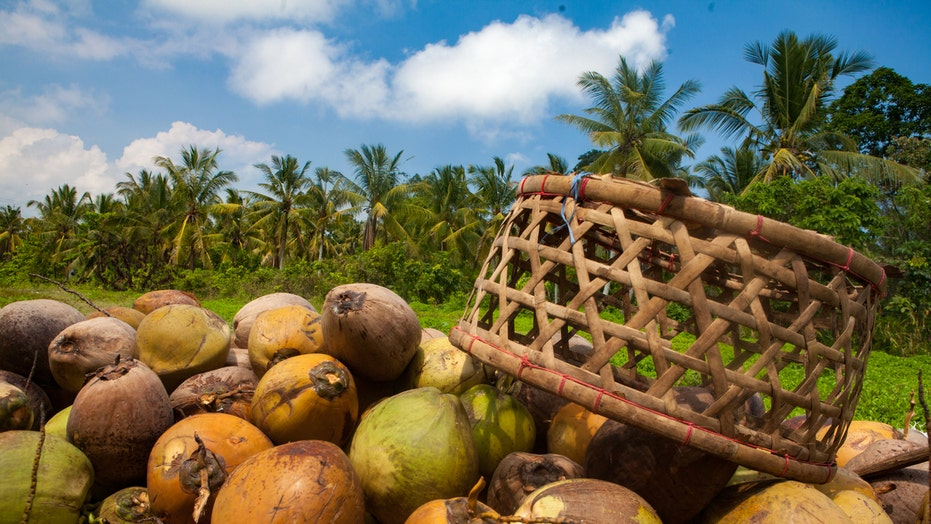 School in Bali allows students to pay tuition with coconuts, plant leaves