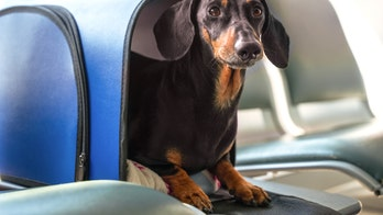 Emotional support animals will no longer be considered service animals on flights, DOT decides
