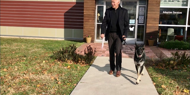 In questo nov. 16, 2018 photo from the Delaware Humane Association, Joe Biden walks with his his newly-adopted German shepherd Major, a Wilmington, Del. (Stephanie Carter/Delaware Humane Association via AP)
