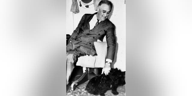 In this 1939, file photo President Franklin D. Roosevelt pets Fala, his Scottish terrier in Washington. (AP 사진)