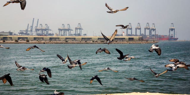 FILE - In this Oct. 11, 2019, file photo, seagulls fly in front of the Red Sea port city of Jiddah, Saudi Arabia. An explosion rocked a ship off Saudi Arabia's port city of Jiddah on the Red Sea, authorities said Monday, Dec. 14, 2020, without elaborating. (AP Photo/Amr Nabil, File)