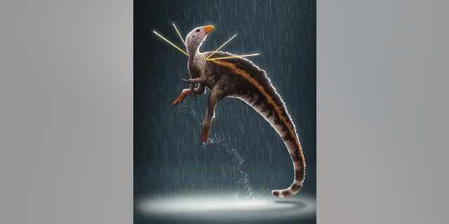 """Ubirajara jubatus is named after a Tupi Indian name for """"lord of the spear,"""" in reference to the creature's stiffened, elongate integumentary structures, and jubatus from the Latin, meaning """"maned"""" or """"crested."""" (Bob Nicholls / Paleocreations.com 2020)"""