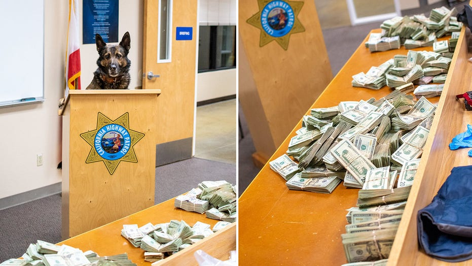 California K-9 sniffs out $  300G in suspected drug money during traffic stop