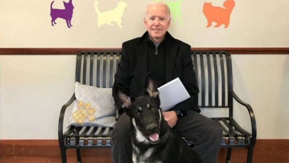 'Major' news for White House as Biden to bring dogs, 새 고양이: Why pets play 'important role' for presidents