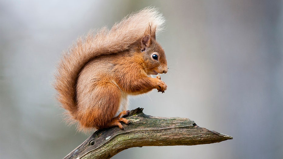 New York neighborhood residents report squirrel attacks