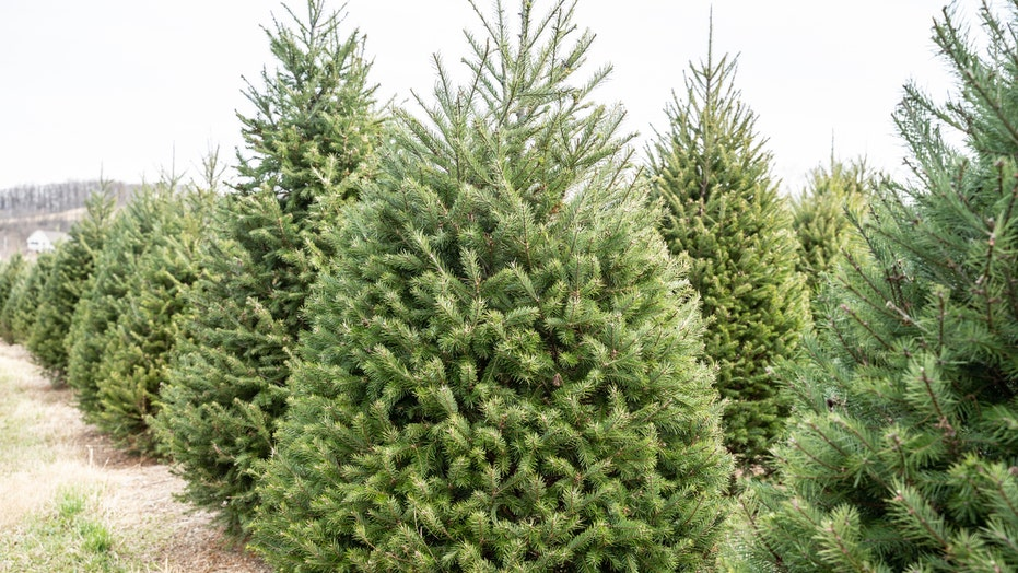 Florida woman delivers 124 Christmas trees to struggling families