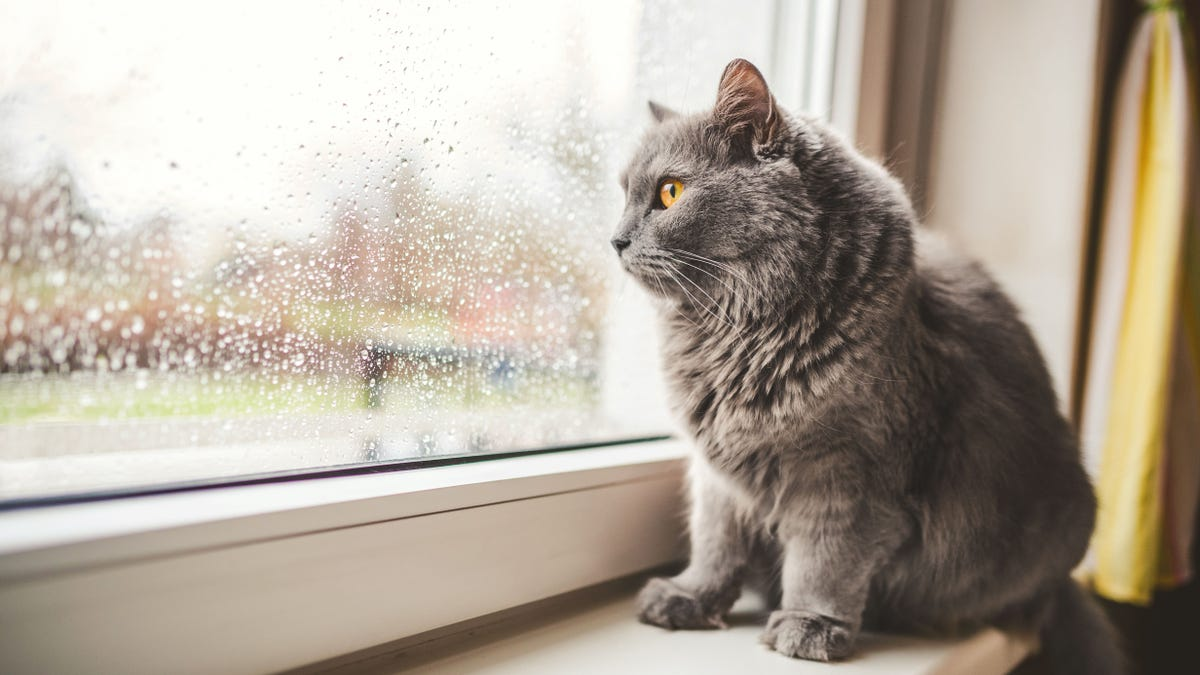 Smooshy Faced Cats Can T Show Emotion Research Suggests Fox News
