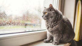Smooshy-faced cats can't show emotion, research suggests