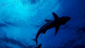 2020 deadliest year for shark attacks since 2013