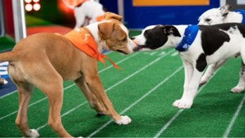 Puppy Bowl and its furry competitors to return this year, despite pandemic