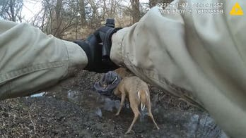 Kansas game warden frees tangled deer by literally shooting their antlers apart