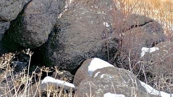 Photo of Nevada mountain lion sparks 'Where's Waldo?' moment
