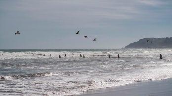 Chilean authorities spread false tsunami warning, apologize for causing panic