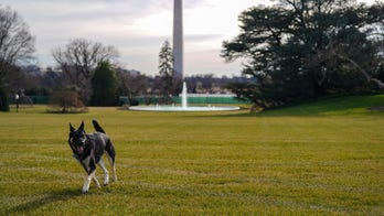 Champ and Major, President Biden's dogs, move into the White House