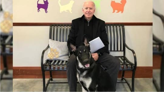 Biden's dog trainer says move to White House 'a little rushed' but solvable: report
