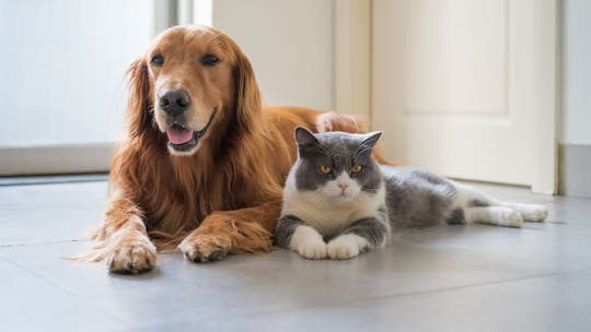 States that favored cats or dogs during coronavirus pandemic: Report