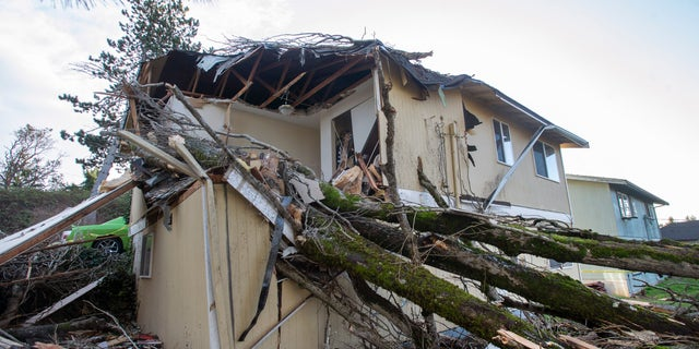 A windstorm toppled a large tree onto a house in Tacoma, 华盛顿州, 星期三初, 一月. 13, 2021, trapping a woman in bed. Firefighters were able to extricate the woman and take her to an area hospital. (Drew Perine/The News Tribune via AP)